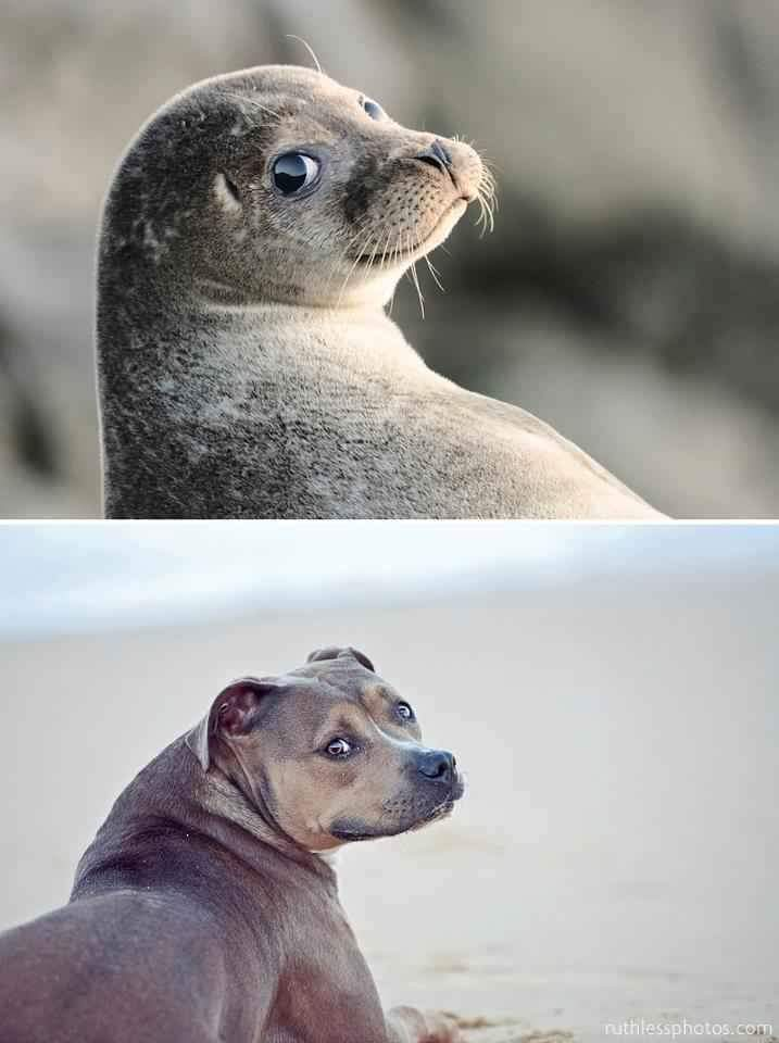 570634f9385a9 photogenic land dog and sea dog meme by pbarberverizon ) memedroid