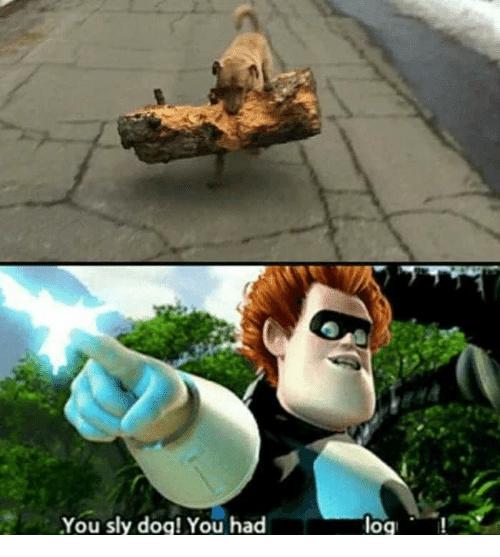 You sly log! - meme