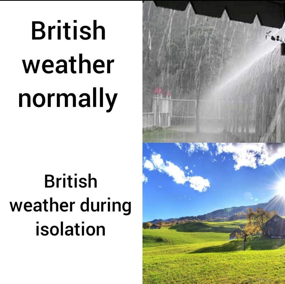 Sunny - meme