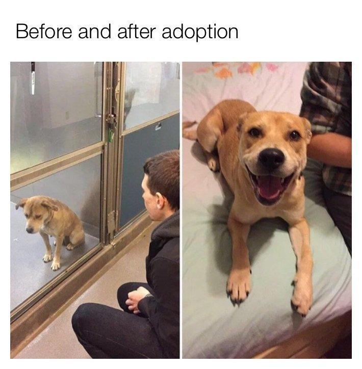 Adopt - meme