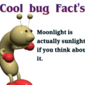 Hope it doesn't BUG you, but maybe it can BRIGHTEN your day :]