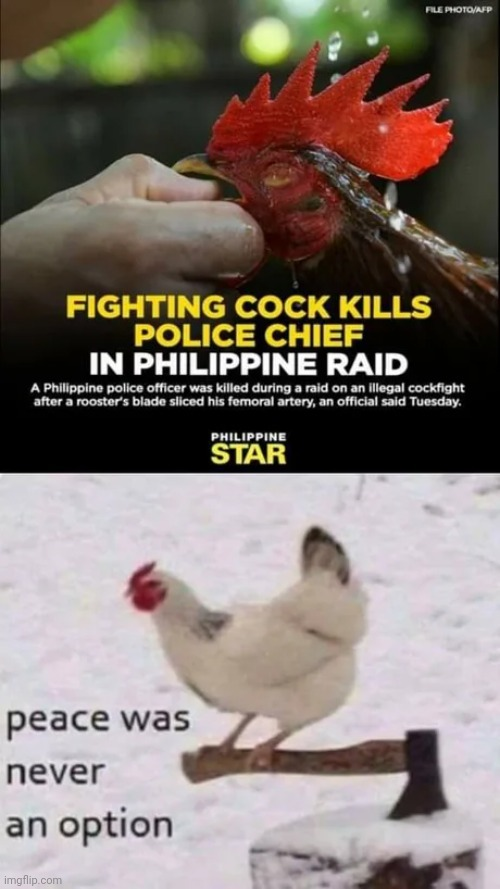 Don't mess with the cock... - meme