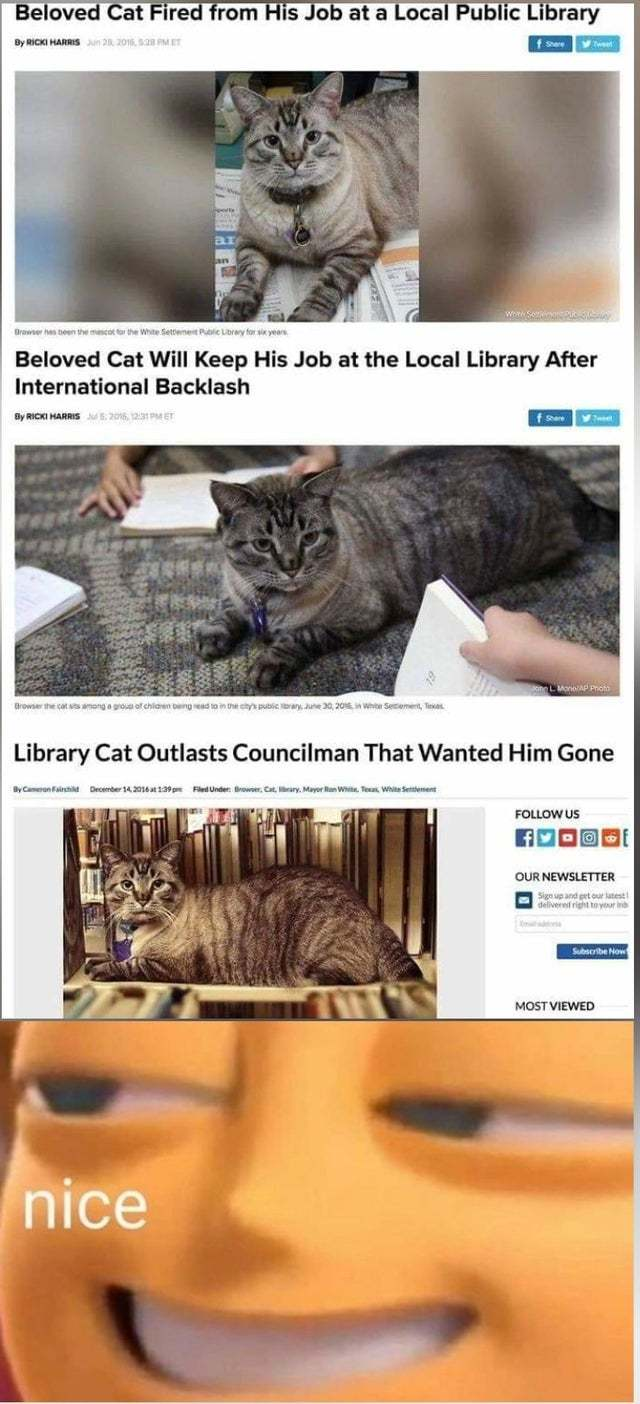 Beloved cat fired from his job at a local public library - meme