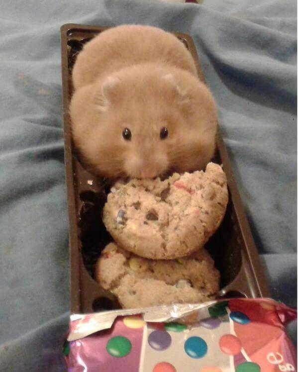 On m'a dit que je pouvais devenir ce que je voulais alors je me suis transformé en cookie ! - meme