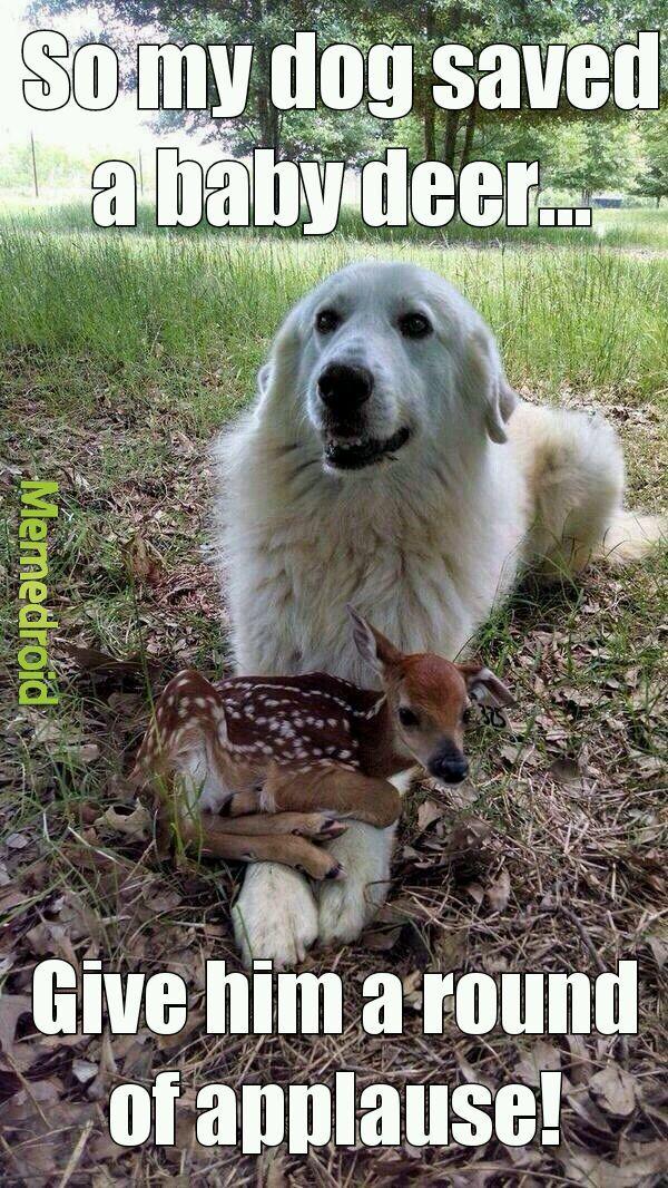 579ba461072a9 i love my dog meme by hatri420 ) memedroid