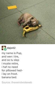 pls kill me pupper - meme