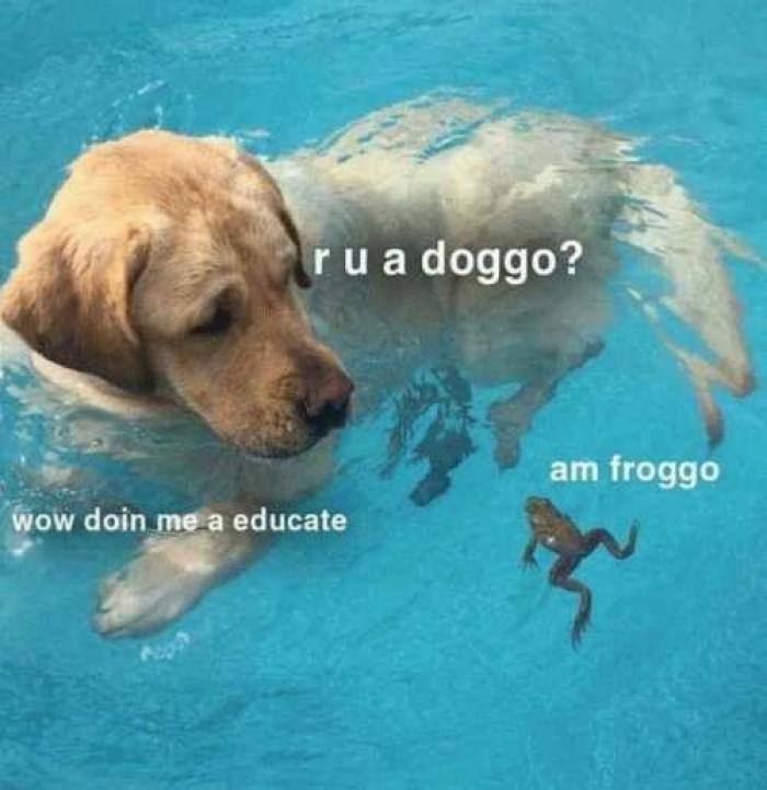 doin me a educate - meme
