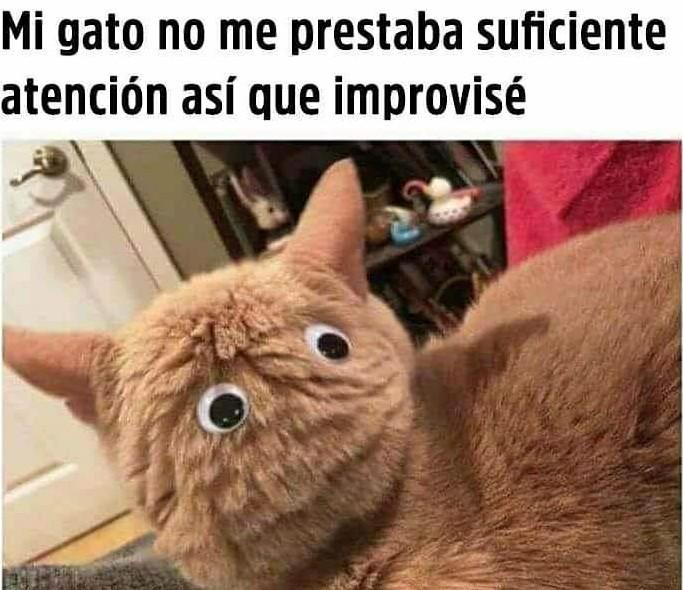 Miauravillosa jugada - meme