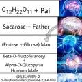ta no ácido desoxirribonucleico