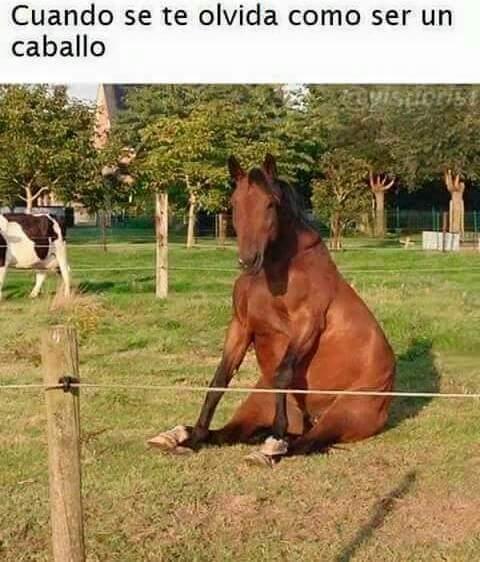 caballo - meme