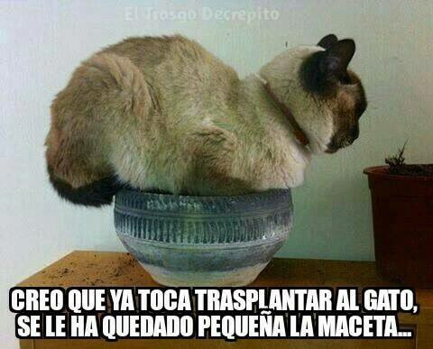 Gatoplantas... - meme