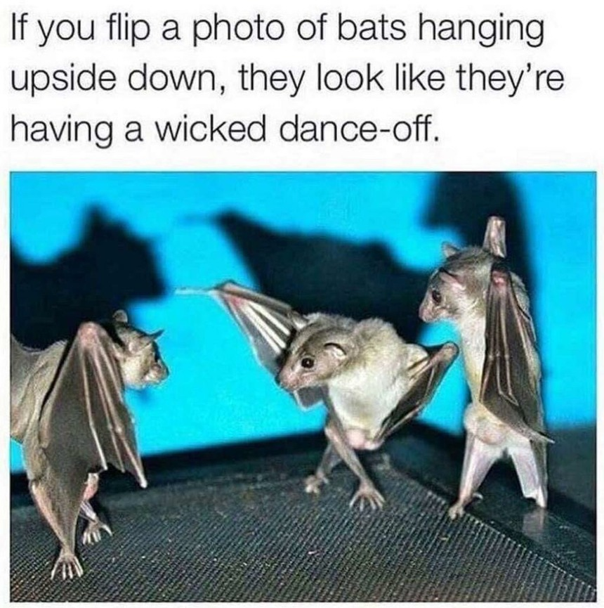 Bat danceoff - meme