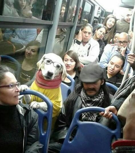 Perro intelectual - meme