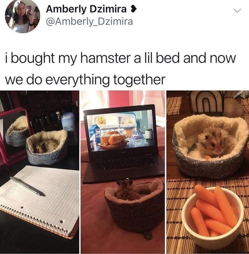I don't like raw carrots - meme