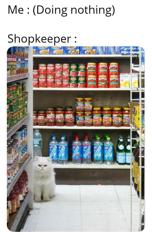 Get out if you don't wanna buy anything hooman - meme