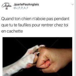 Merci Doggo - meme