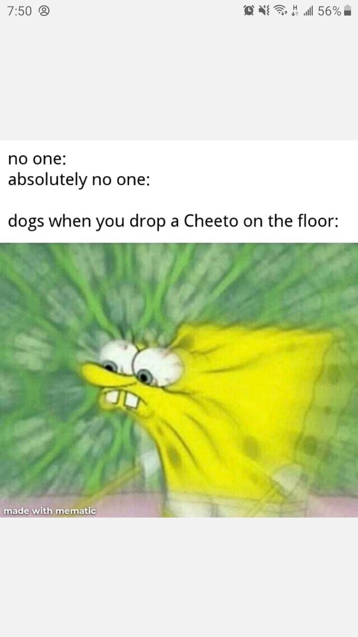Dogs - meme