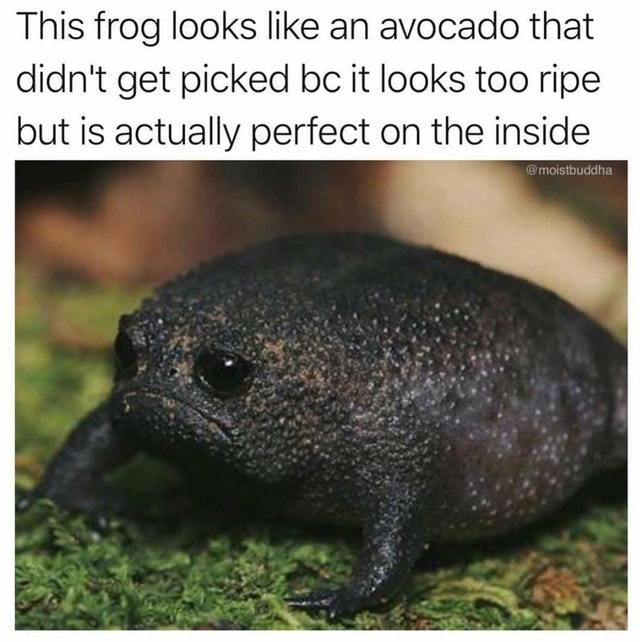 The perfect avocado - meme