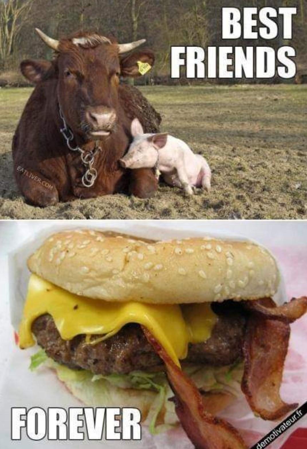 Vache + porc = burger - meme