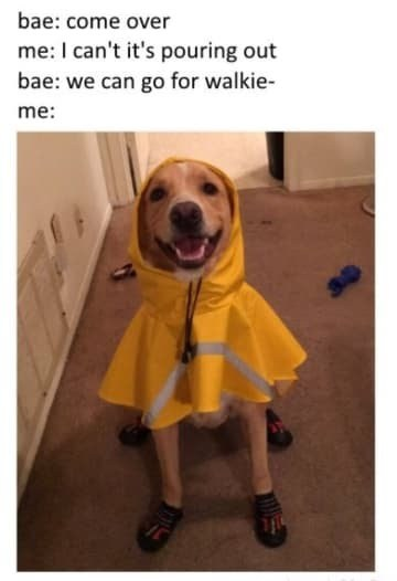 Puppers - meme