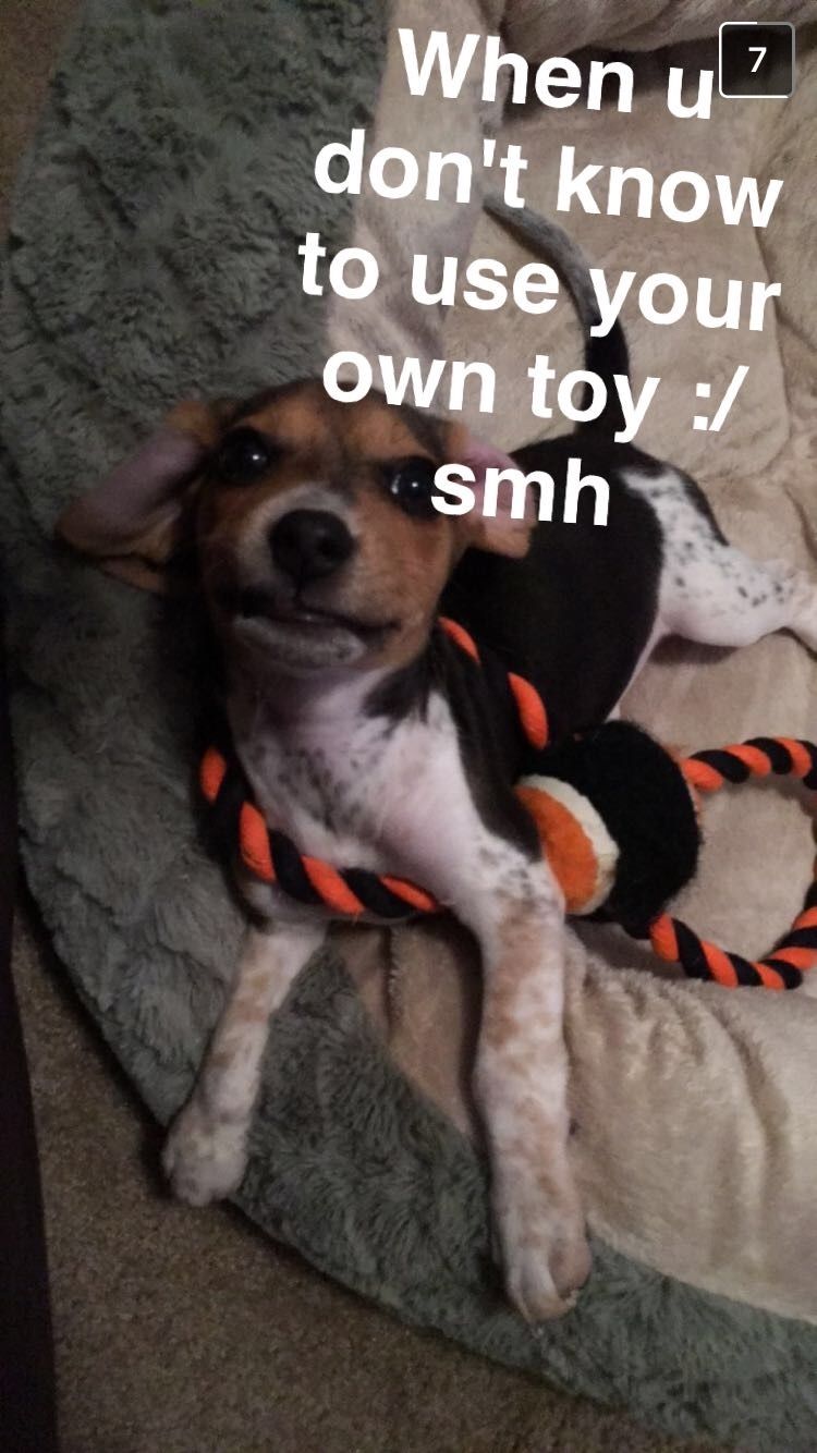 my puppy is a bit confused.... - meme