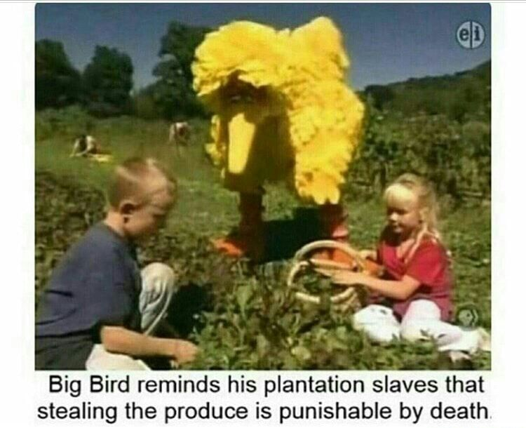 Big bird laying down the LAW - meme