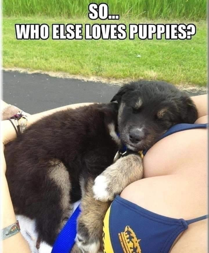 puppies are nice - meme