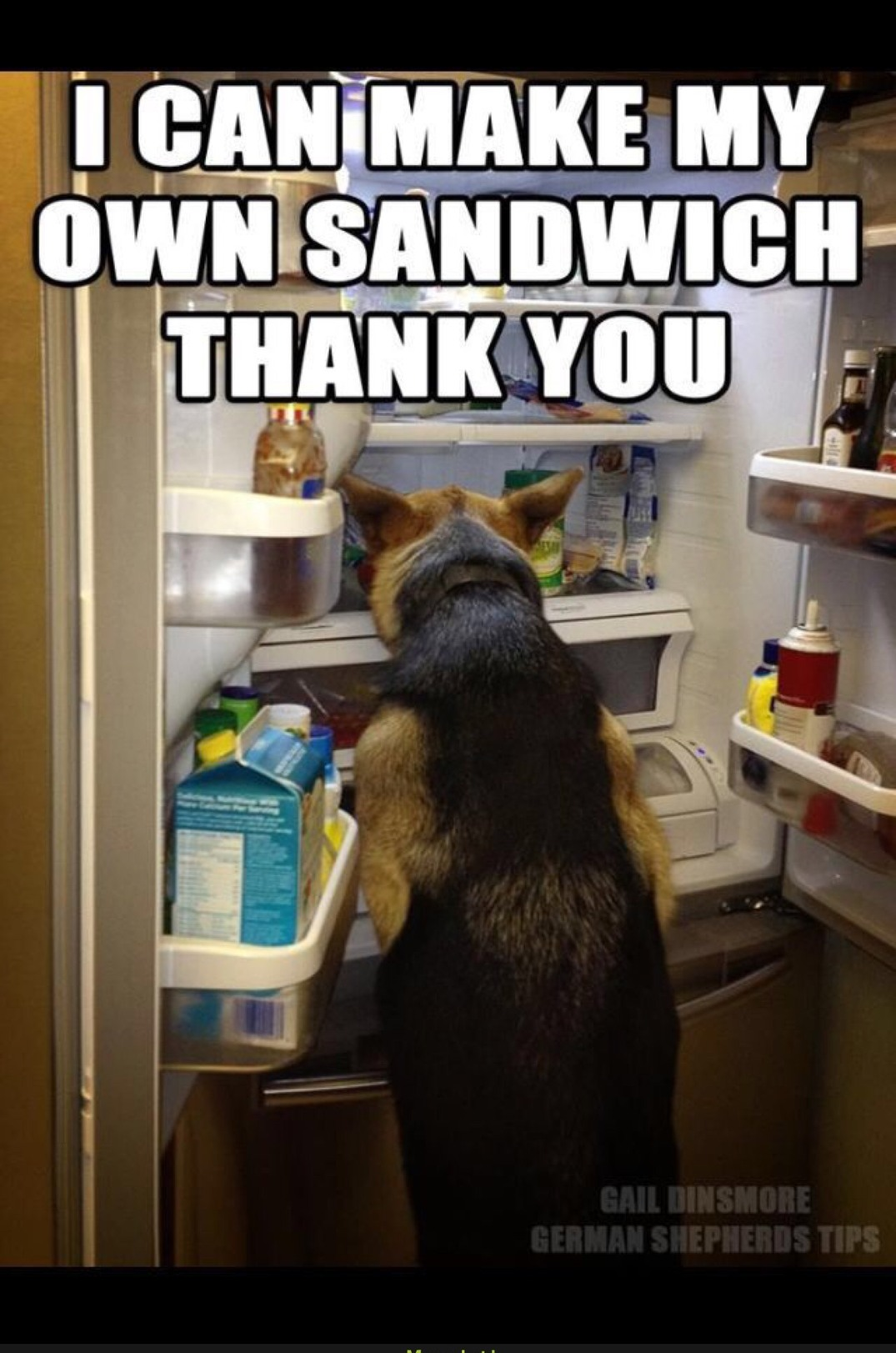 bruh I'm so baked I think a dogs in the fridge - meme