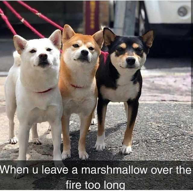 Marshdoggo - meme