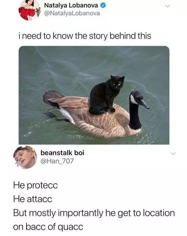 black cat on back of quak - meme