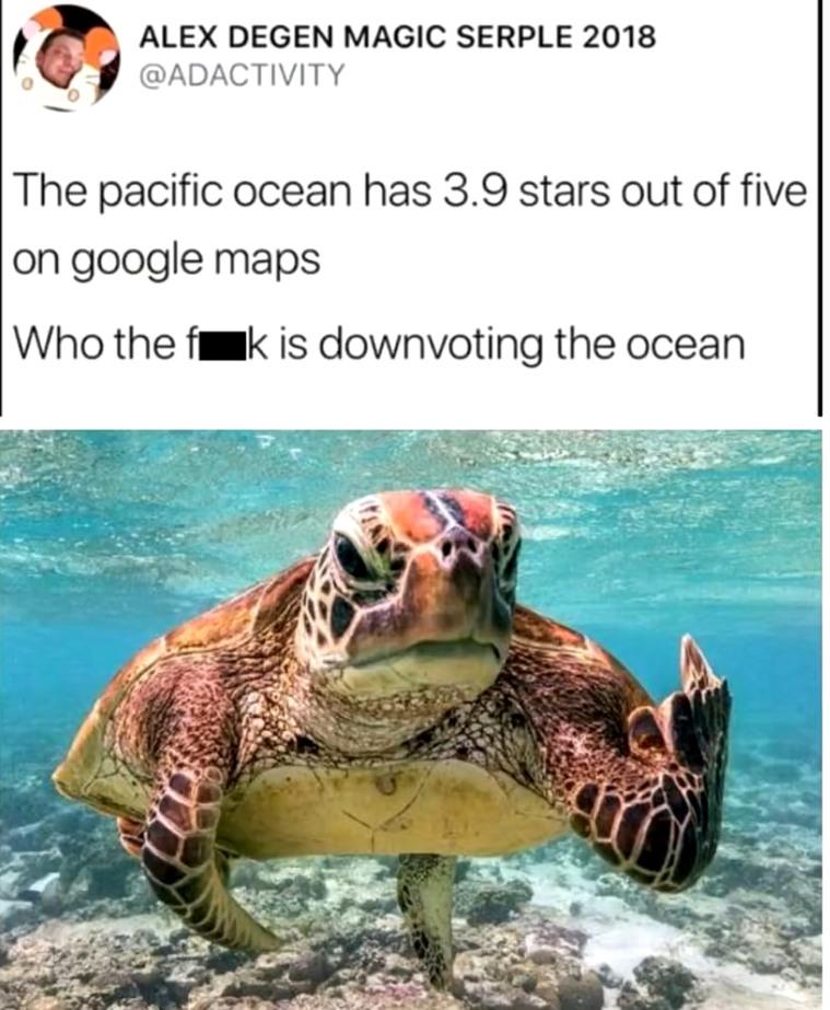 Ocean - meme