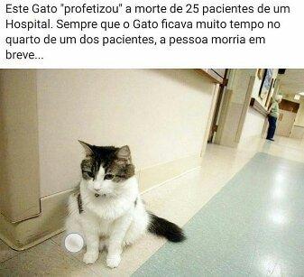 Nunca quero ficar perto desse gato :motherofgod: - meme