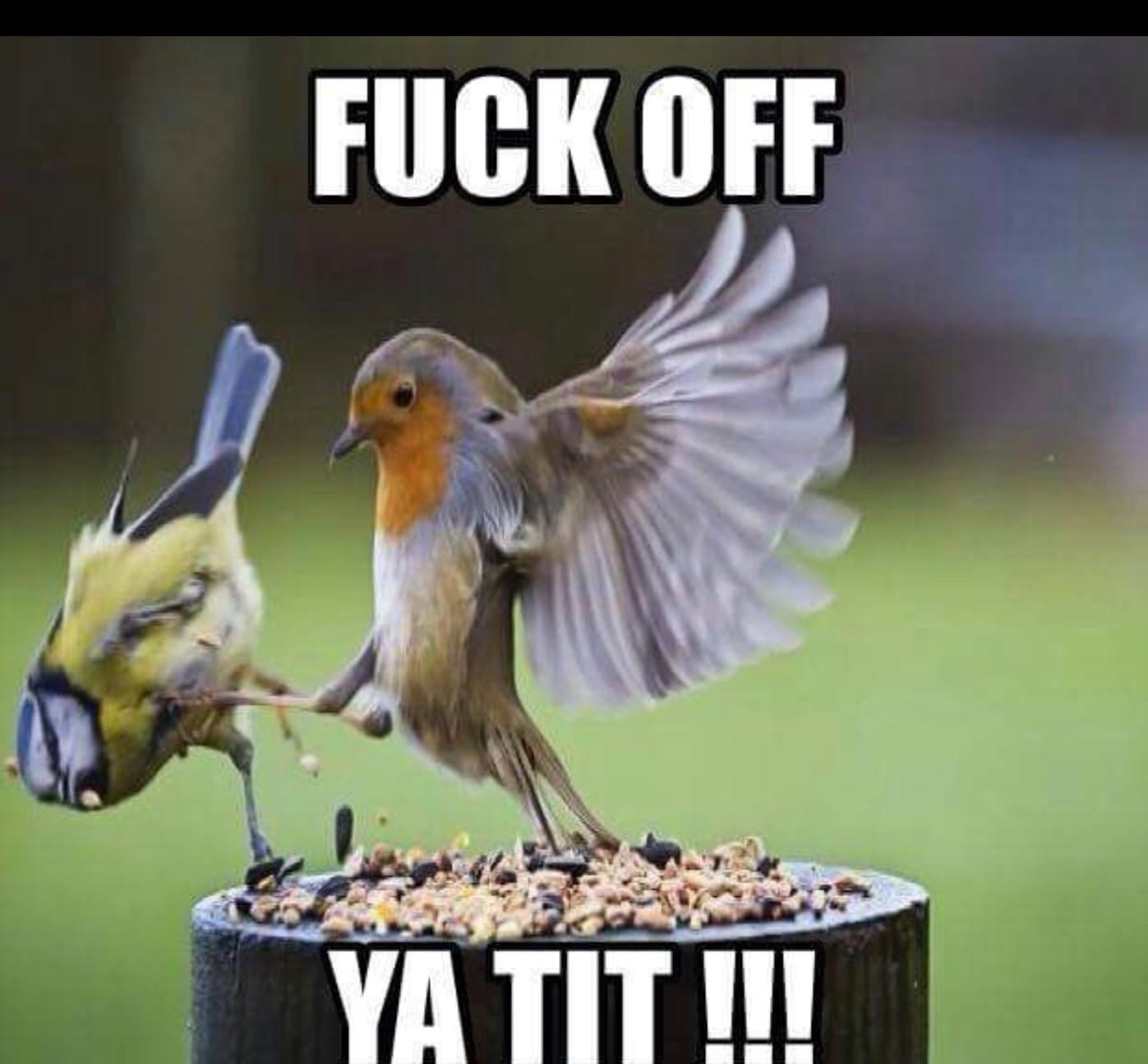 Fuck you, i'm a bird iv