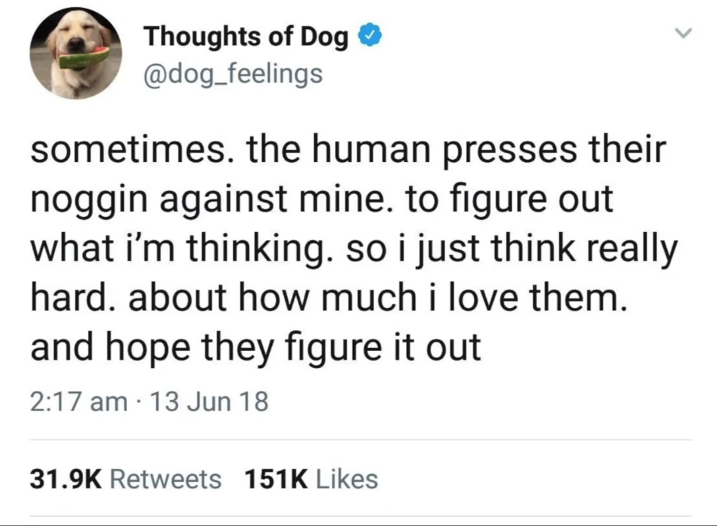 I love Thoughts Of Dog - meme