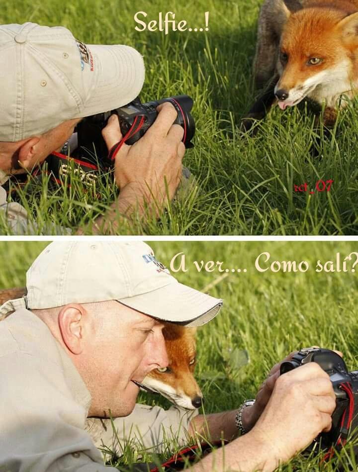 Selfie nivel : zorro - meme