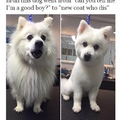 very cute doggo