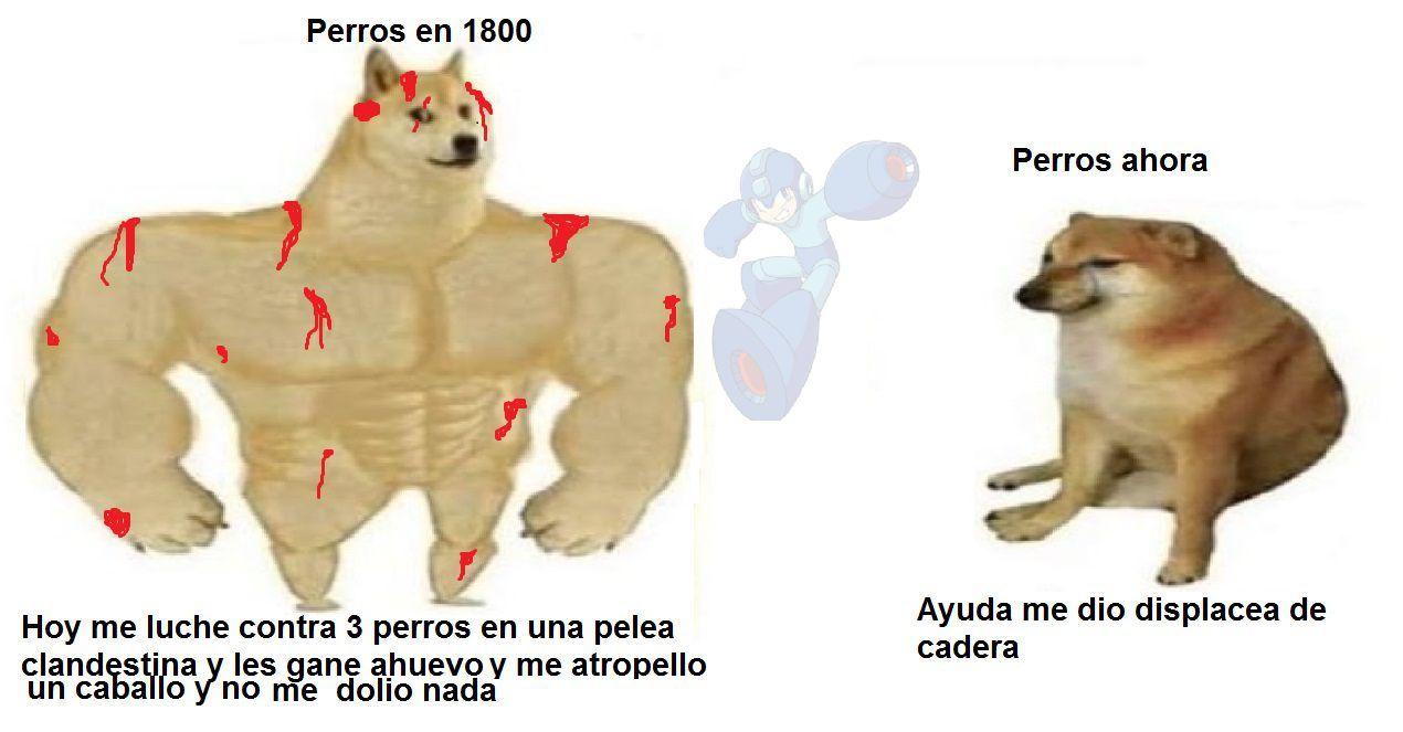 así es eso hacían los perros en 1800 y la wea :cool: - meme