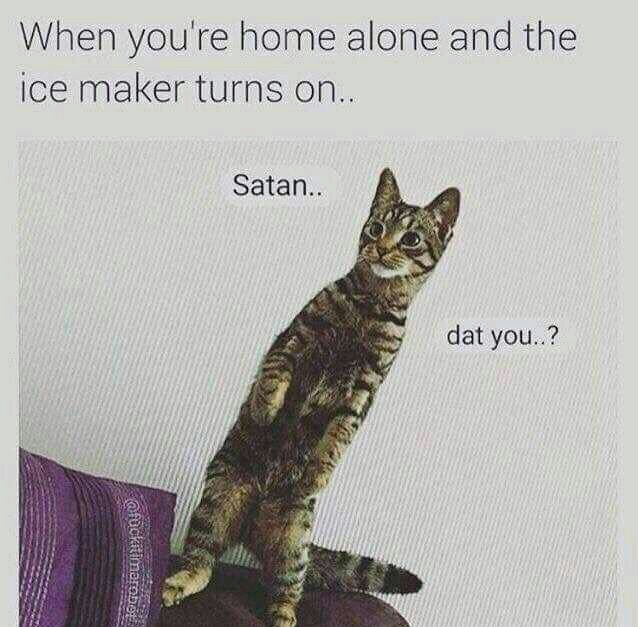 Scared Pussy - meme
