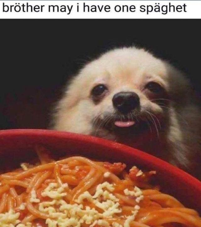 Brother my I have one spaghet? - meme