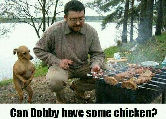 Give dobby some chicken - meme