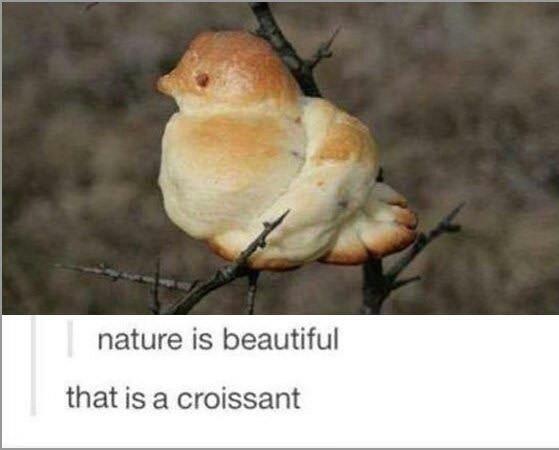 Beautiful croissant - meme