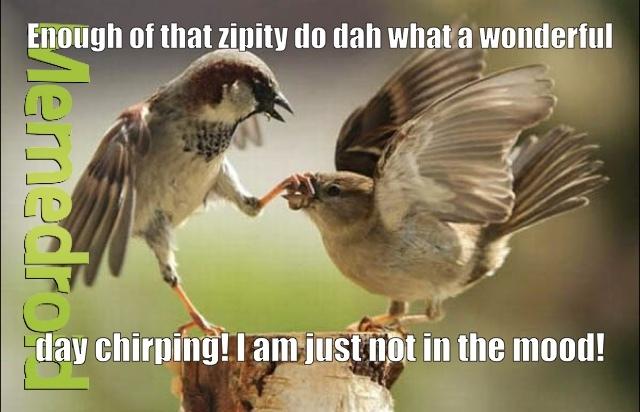 Birds don't always do it - meme