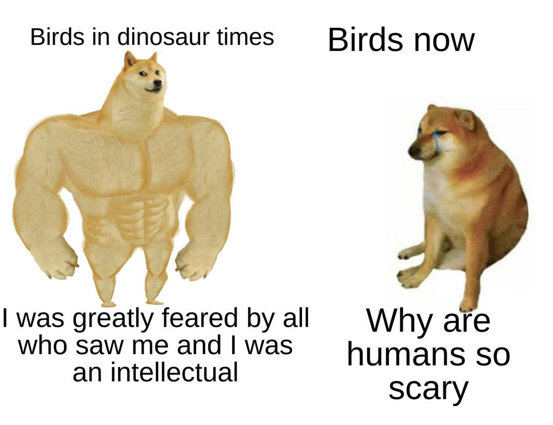 Birds - meme