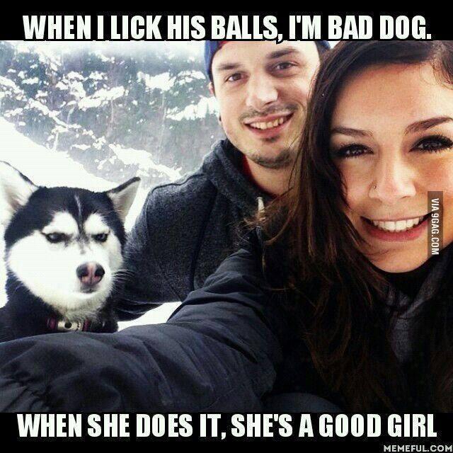 The dog!! - meme