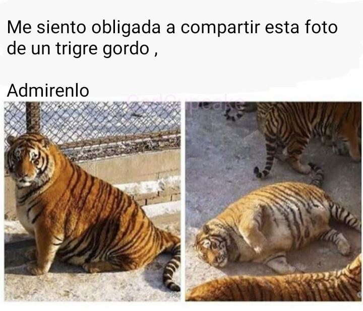 Ese tigre es mi espiritu animal(? - meme