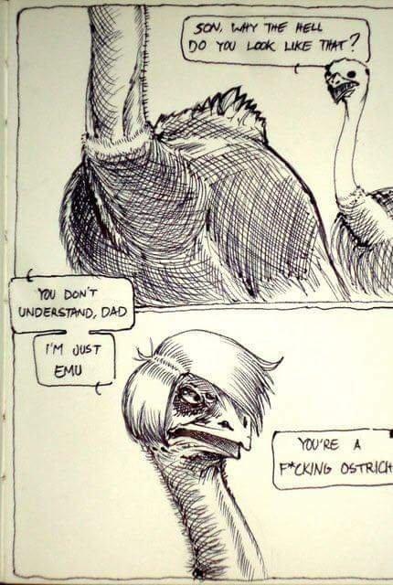 Emu - meme