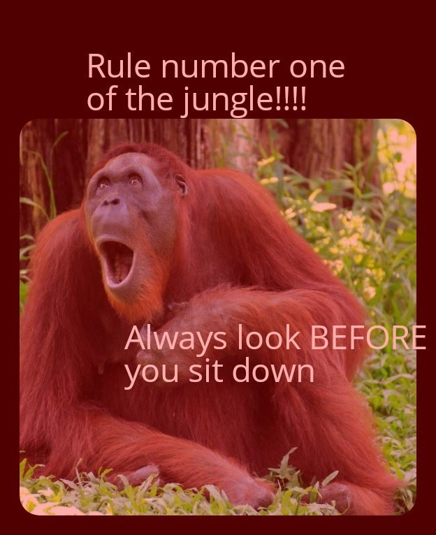 Rule 1 of de jooongle - meme