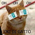 Oki di gatto