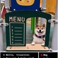 Doggo shop