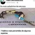 Passa ae CaRaLhO